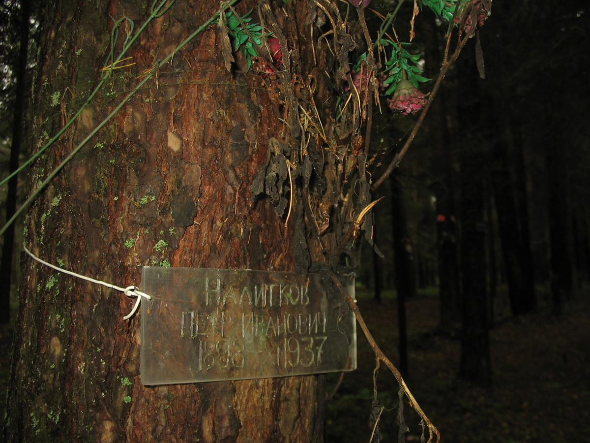 Памятная табличка П. И. Налиткову. Фото 25.08.2007